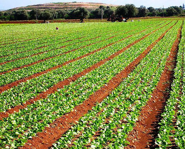 Le mafie nell'agroalimentare: antica tradizione italiana