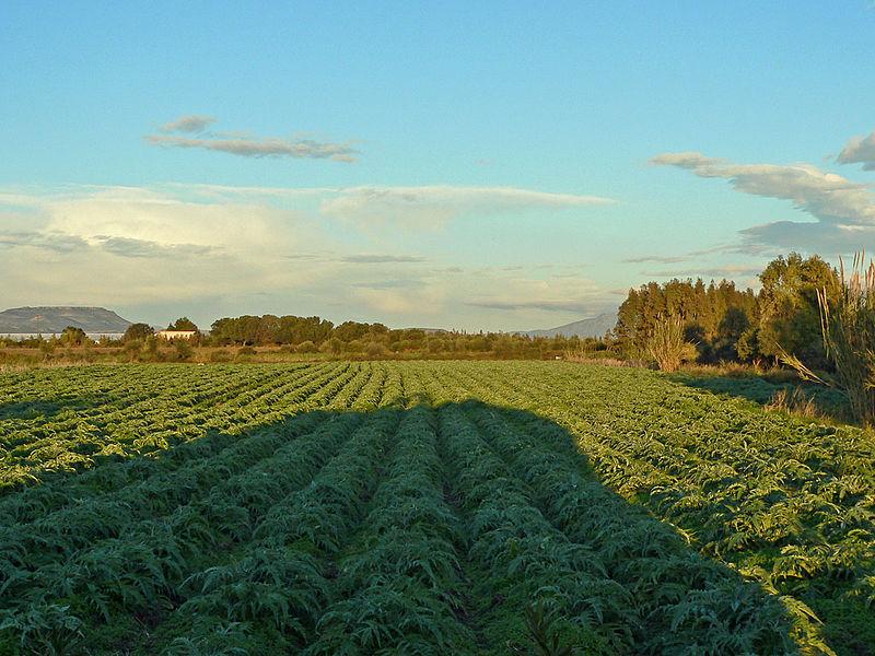 Agricoltura sostenibile con il Protocollo d'intesa WWF-Inea