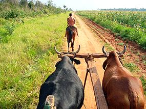 Tra land grabbing e rivolte: la crisi dell'agricoltura mondiale