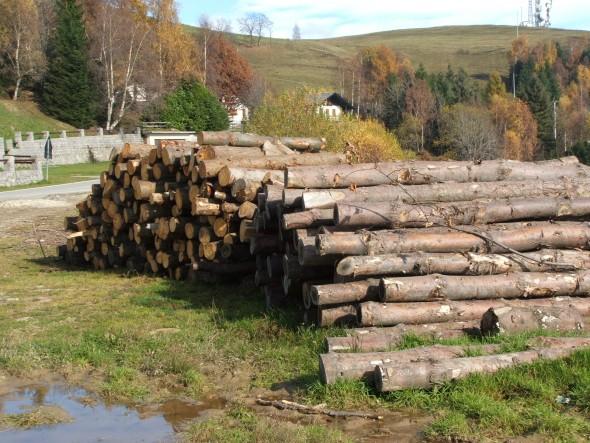 L'Italia non rinuncia all'importazione di legno illegale