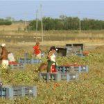 immigrati_agricoltura-e1412332824153