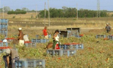 Caporalato: a Cassibile, finalmente, si indaga sulle aziende