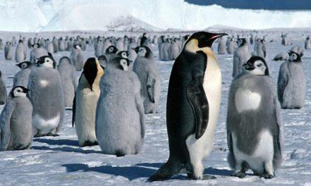 Cambiamenti climatici? La parola ai pinguini di Adelia