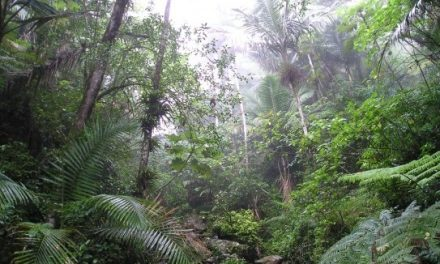 In India dura battaglia per salvare la foresta dalla miniera