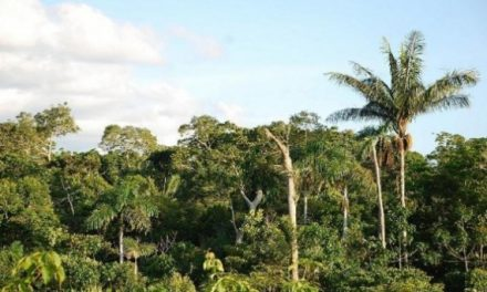Il futuro delle foreste sempre più in pericolo