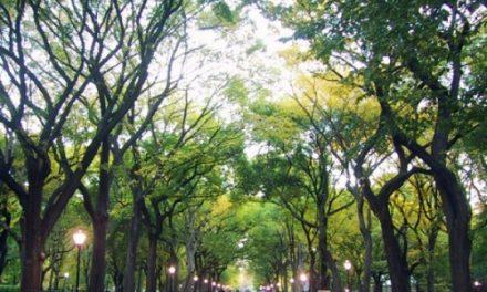 Rapporto Ispra: migliora la qualità dell'aria, ma ancora pochi spazi verdi
