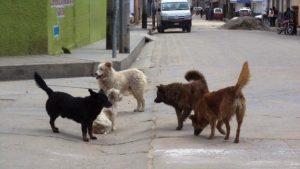 perros huamachuco
