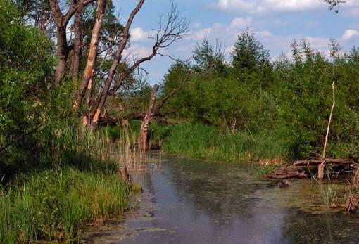 Zone umide: risorse fondamentali per il nostro Pianeta