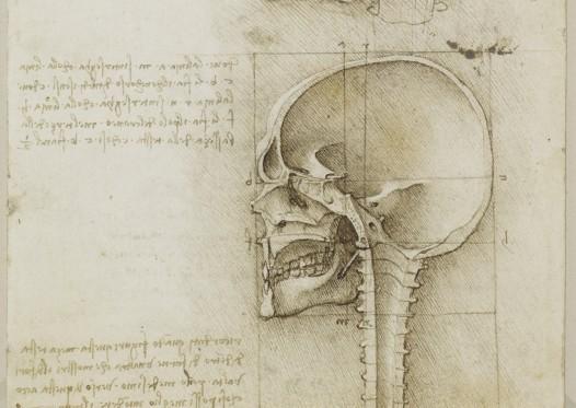 On-line i disegni anatomici di Leonardo