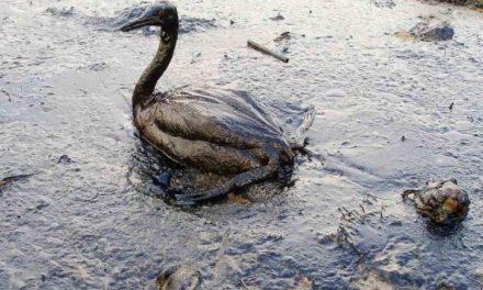 Petrolio a Genova: la situazione rimane critica
