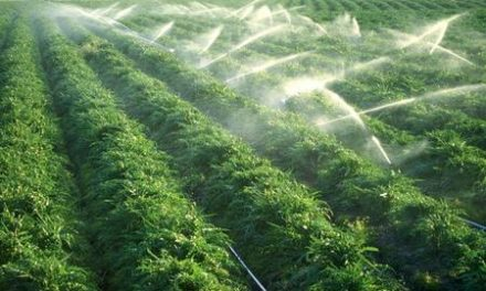L'Ispra lancia l'allarme, troppi pesticidi nell'acqua potabile