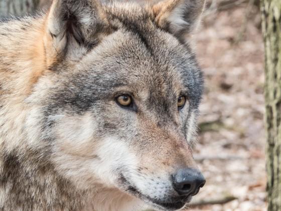Biodiversità: buone notizie da Legambiente, ma l'allarme resta