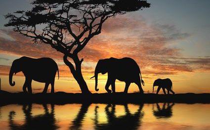 Internet of Elephants: l'uso ambientale dei big data