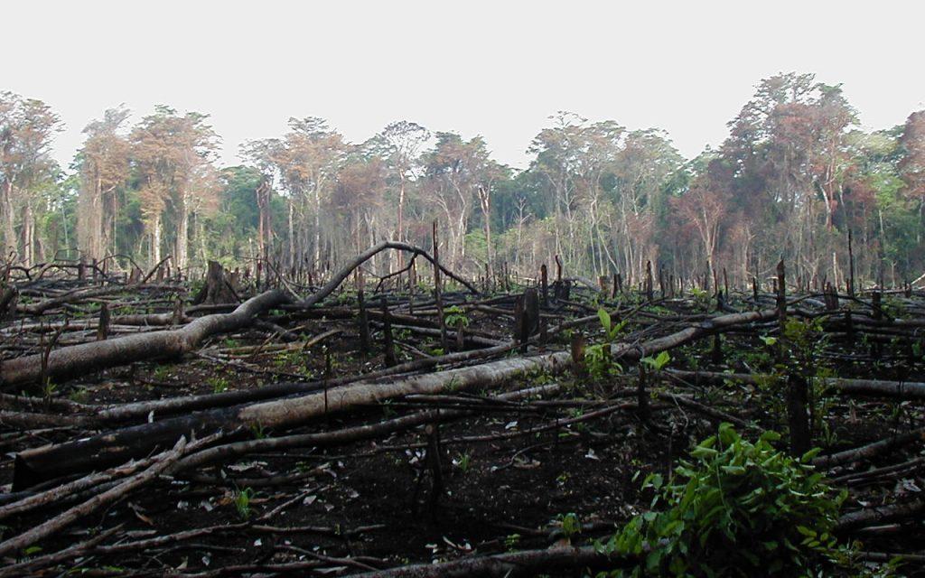 Ancora alto il tasso di deforestazione: nessun cambiamento dal 2001