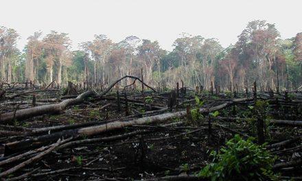 La deforestazione causa dell'ebola in Africa? La ricerca del Politecnico di Milano