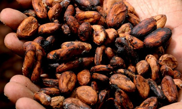 Il cacao illegale è causa della deforestazione in Africa