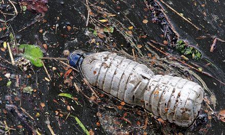 Isola di Plastica, dramma ambientale a largo del Pacifico