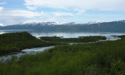 Deforestazione in Svezia: la produzione di fazzoletti distrugge la foresta boreale