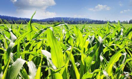 Rotazione dei terreni e riforestazione: così riparte il clima