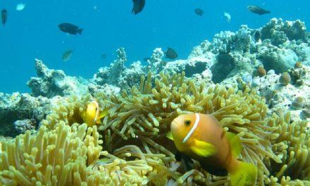 Oceani a rischio: aumento di zone senza ossigeno e pericolo estinzione