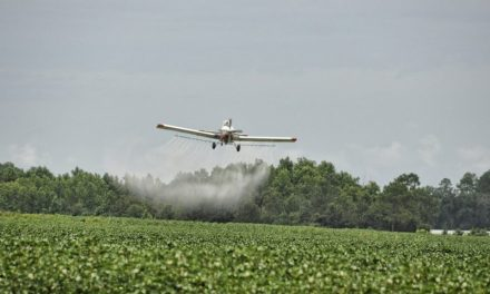 Alternativa al glifosato: saranno le erbacce i nuovi diserbanti ecosostenibili