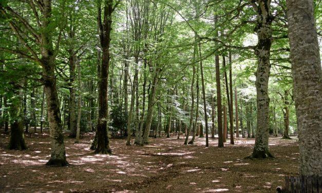 Green economy in crescita: in Italia oltre mille aziende certificate Pefc
