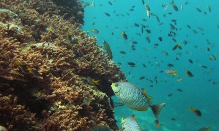 Aumento delle temperature nei mari: a rischio la vita di molte specie