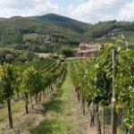 Quel controllo mafioso che mette in crisi il settore vitivinicolo a Marsala