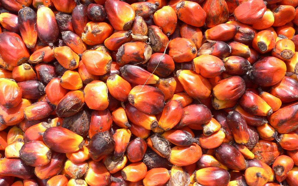 In Indonesia continua la deforestazione per produrre olio di palma