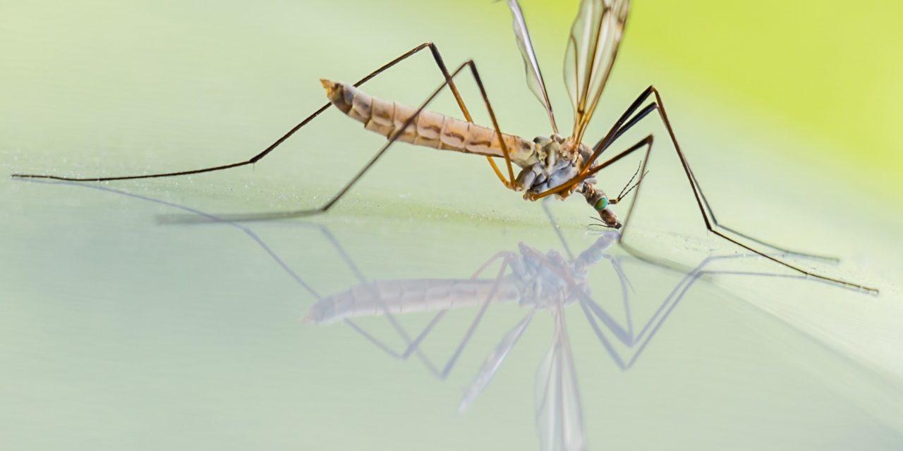 Dopo i mari, è allarme microplastiche anche negli insetti