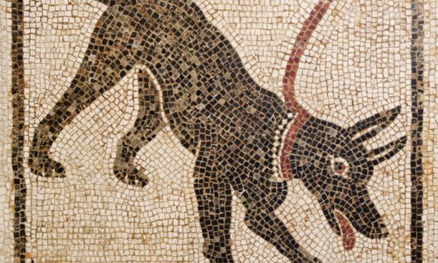 A Torino, una mostra sulla figura del cane nella storia dell'arte