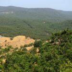 Parco dei Nebrodi: scacco alla mafia dei pascoli