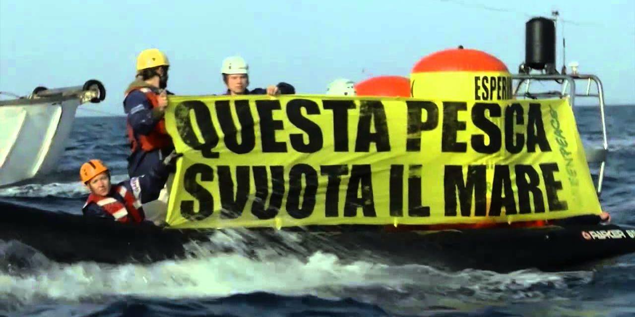 Greenpeace: gravi ritardi sulla tutela delle zone di riproduzione nello Stretto di Sicilia