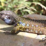 L'impatto umano sugli ecosistemi danneggia le specie più rare