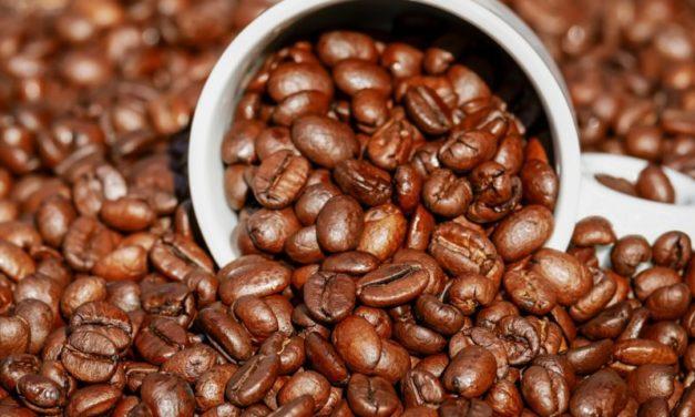 Siccità e parassiti: 60% delle specie selvatiche di caffè a rischio estinzione