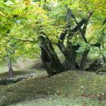 Aumento delle foreste in Italia: crescono nei luoghi abbandonati