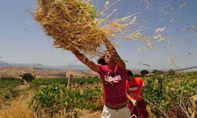 Beni confiscati: 23 anni fa la rinascita delle terre insanguinate