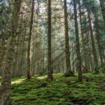 Il duplice effetto del riscaldamento globale sugli alberi e sul clima