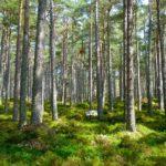 Emergenza foreste: milioni di ettari distrutti dall'agricoltura industriale
