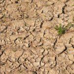 Report Wwf: gestire meglio i bacini idrici per combattere la siccità