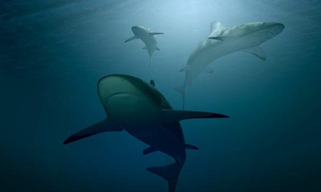 Pesca illegale e plastica: squali e altre specie a rischio nel Mediterraneo