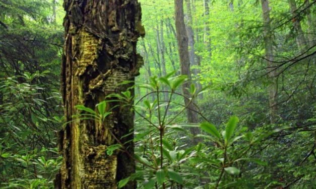 Foreste pluviali tropicali: sottostimato l'impatto del disboscamento sul clima