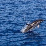 Biodiversità a rischio nel Mediterraneo: solo l'1,67% viene protetto