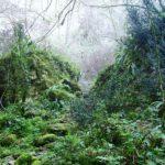 Continua la deforestazione in Amazzonia: rischio di nuove pandemie