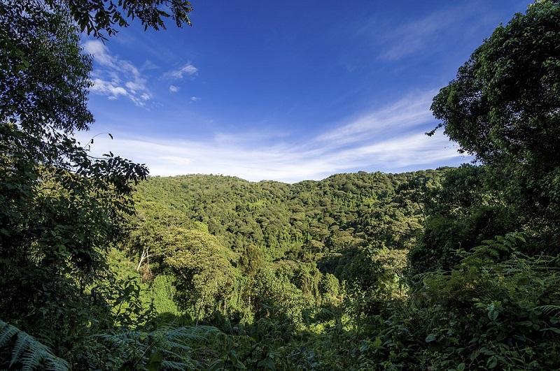 Uganda: foresta di Bugoma a rischio devastazione per far spazio alle coltivazioni