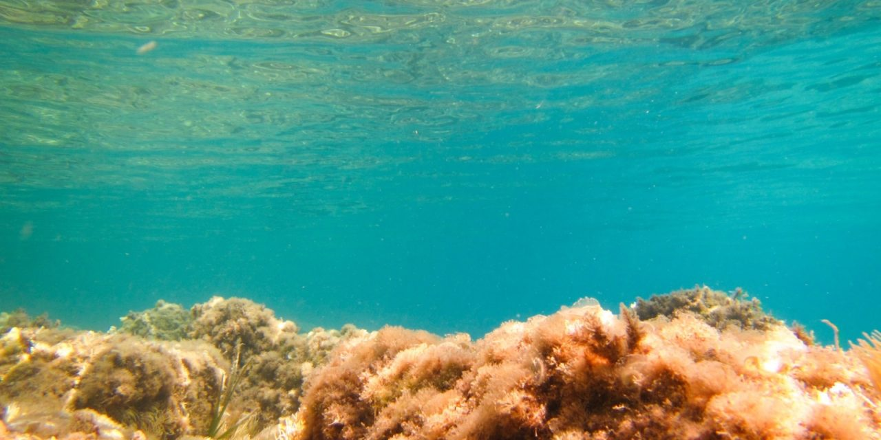 Mare Caldo, gli effetti concreti dei cambiamenti climatici che preoccupano gli studiosi