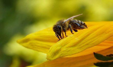 La Francia dice sì ai pesticidi neonicotinoidi, dannosi per le api e per l'ambiente