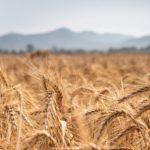 """""""Food Coalition"""", iniziativa di Italia e FAO contro gli effetti della crisi nei Paesi più colpiti"""