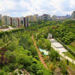 Riscaldamento globale: in città gli alberi e le piante riducono le temperature