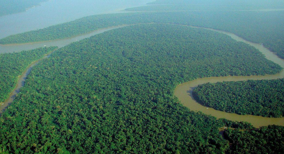 L'Amazzonia brucia per noi